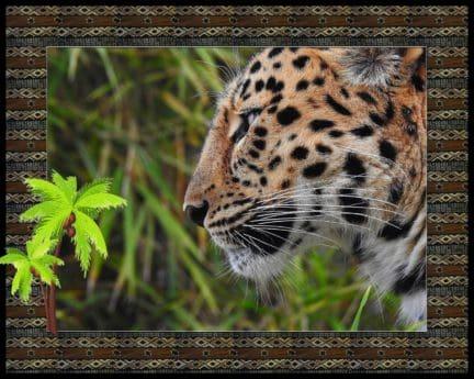 fotomontaggio, leopardo, selvatico, natura, predator, pelliccia, animale, fauna selvatica