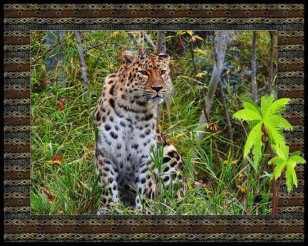 photomontage, nature, animal, wildlife, leopard, wild, safari, predator, leopard