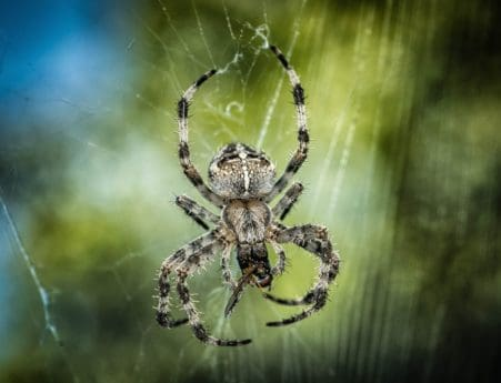 insect, spiderweb, spider, macro, detail, animal, zoology