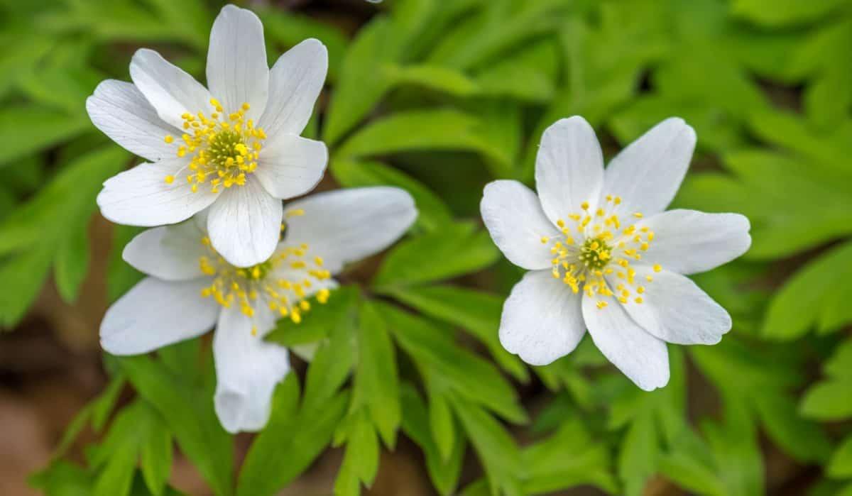 Flora, Blatt, Natur, Garten, Blume, Sommer, Kraut, Pflanze