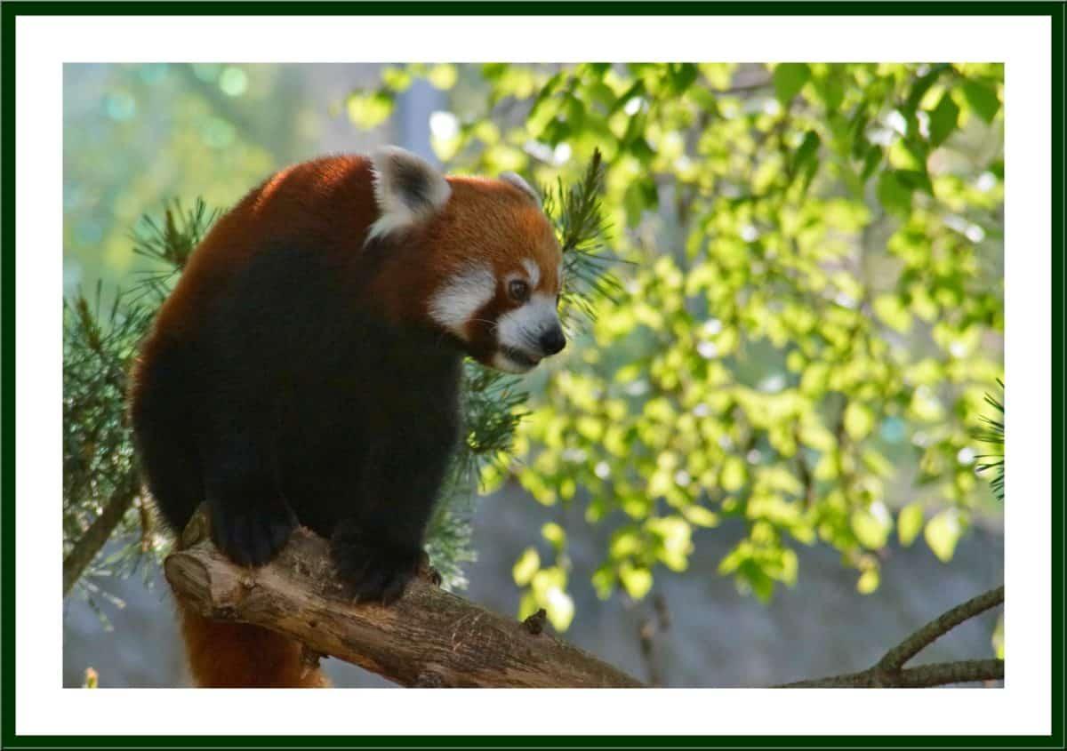photomontage, cadre, animaux, nature, faune, design, art