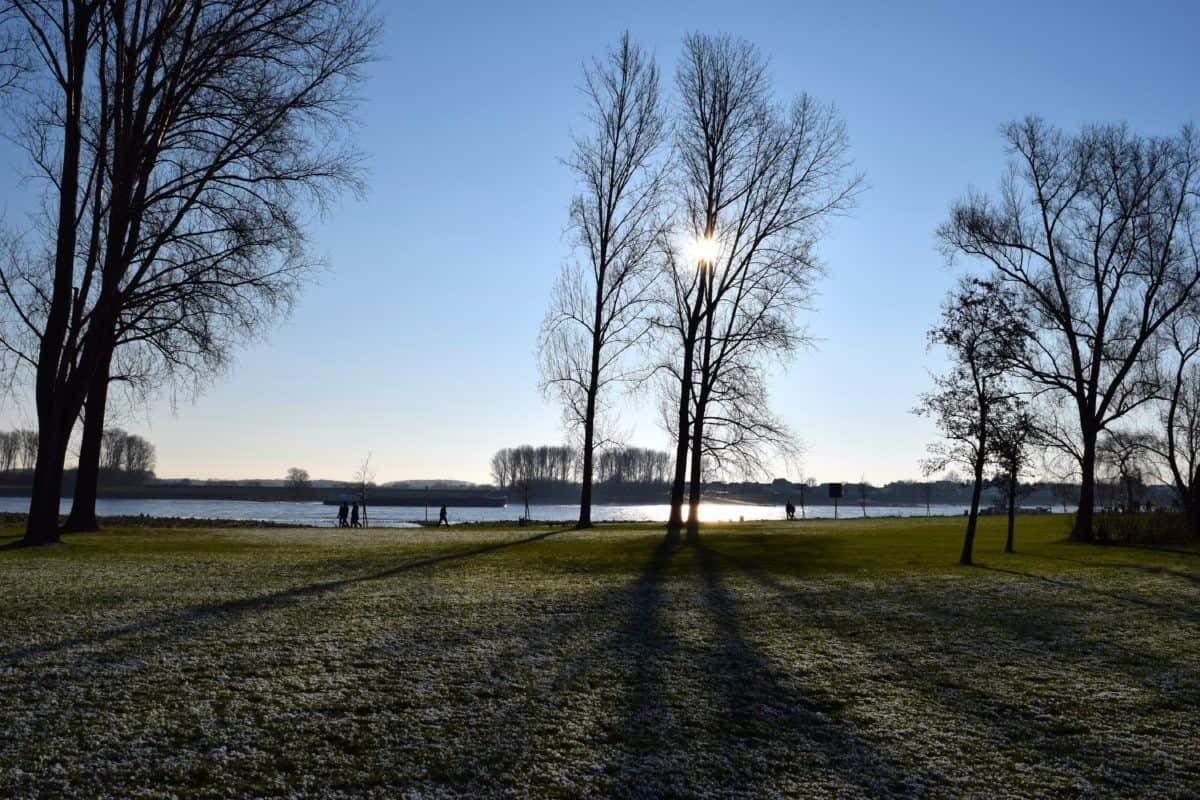 albero, erba, natura, paesaggio, alba, cielo, campo
