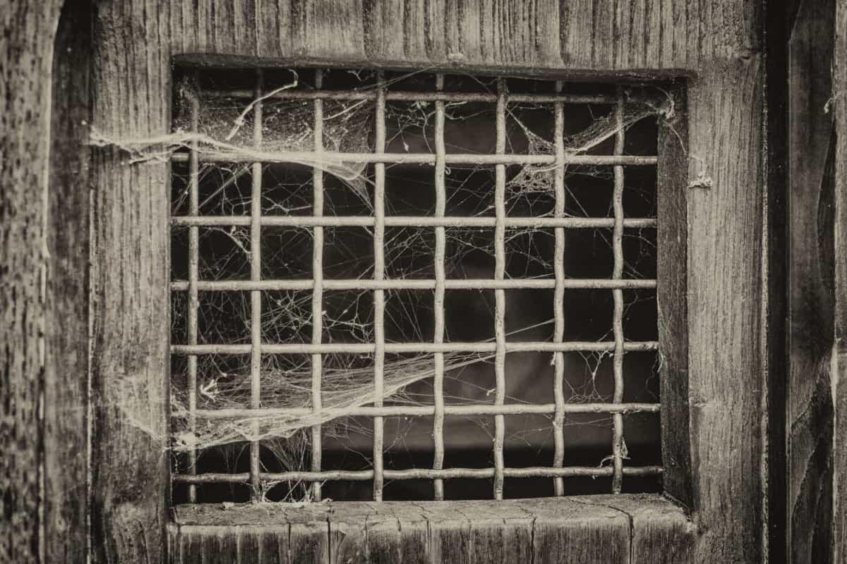 spiderweb, window, old, architecture, building, monochrome