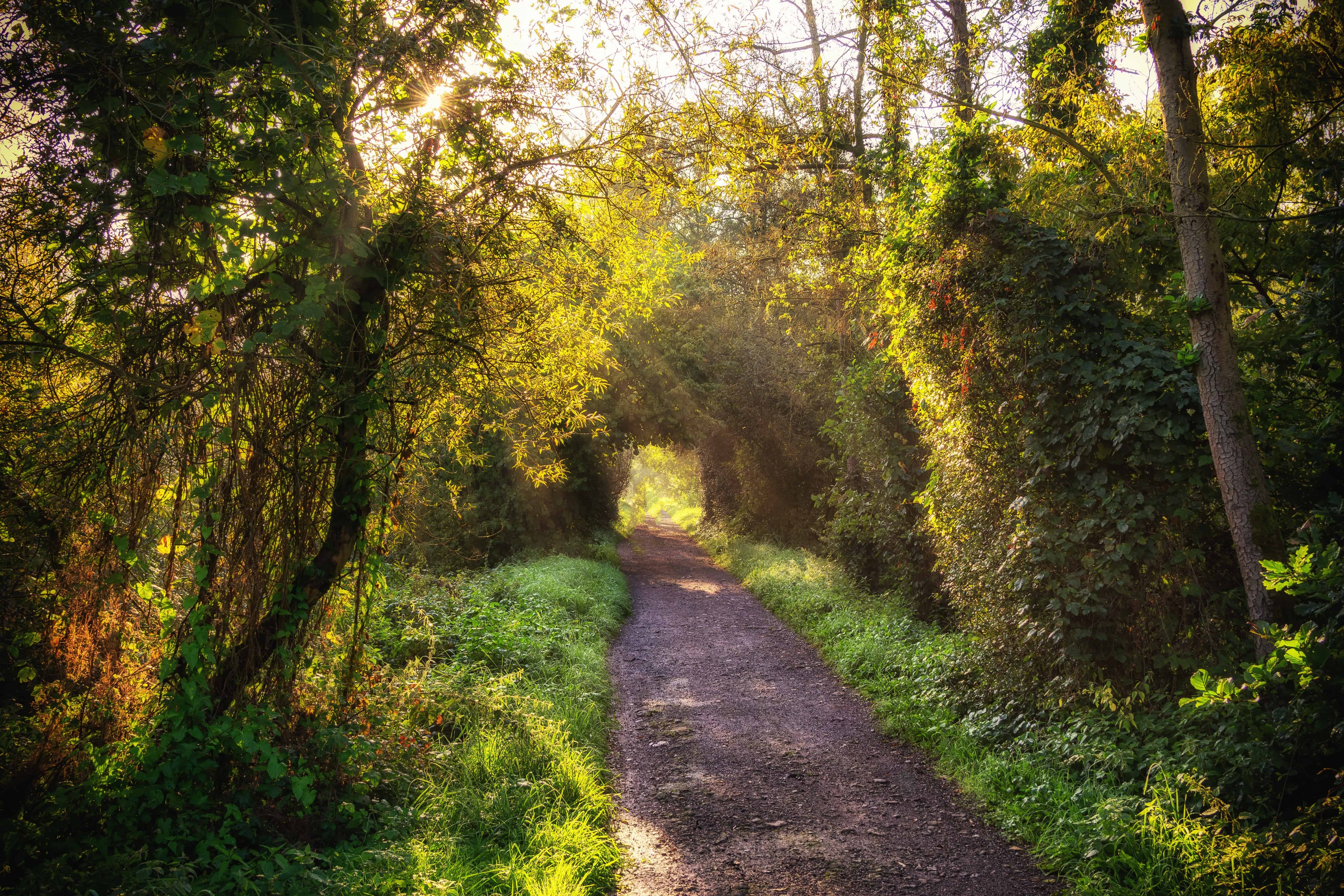 Free Picture: Nature, Road, Wood, Leaf, Tree, Landscape