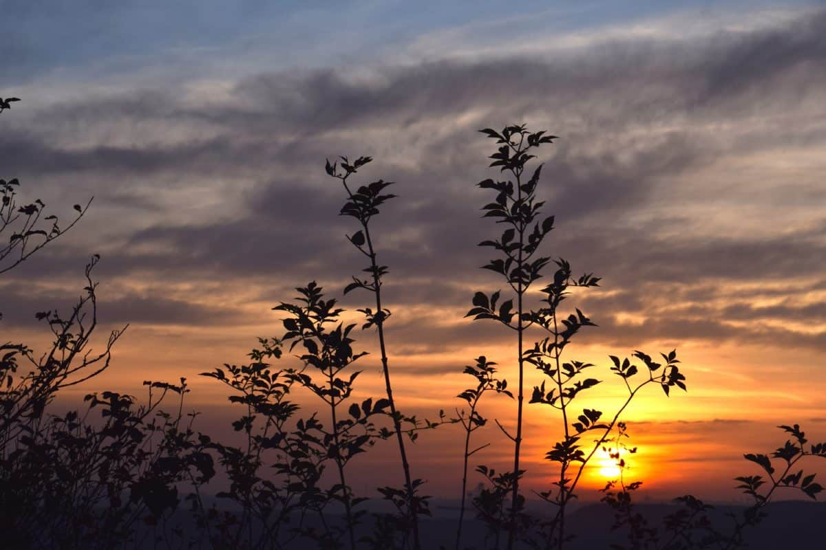 Sunset, silhuet, solen, naturen, himlen, dawn, atmosfære