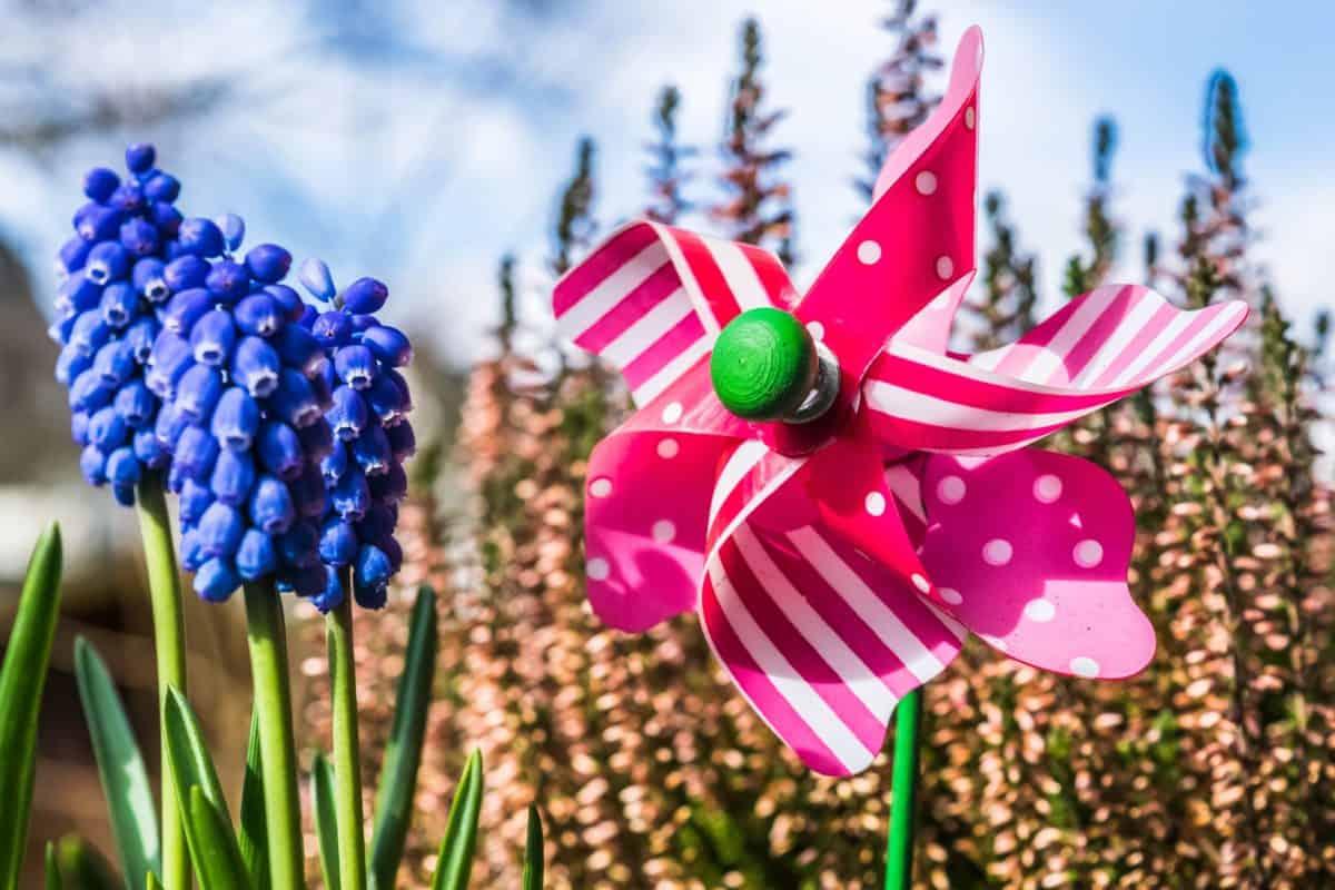 pétale, plante, fleur, jardin, décoration