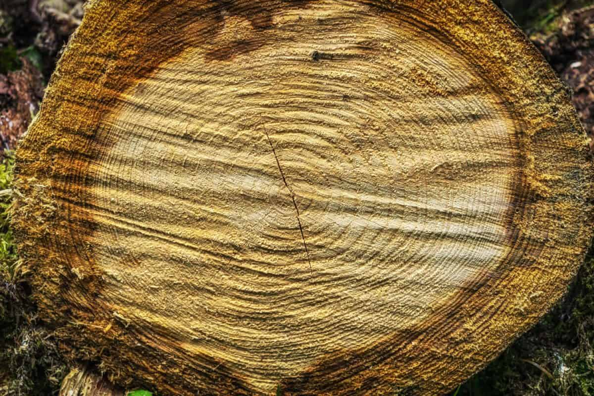 wood, texture, nature, brown, detail, macro, pattern, tree