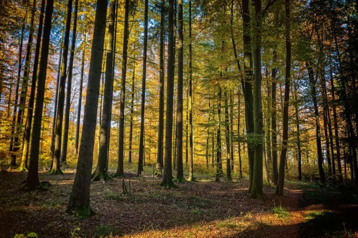 Landschaft, Dawn, Baum, Holz, Blatt, Natur, Wald