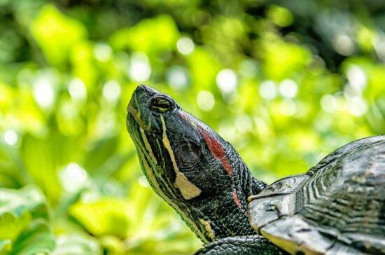 tortoise, nature, shell, reptile, turtle, wildlife