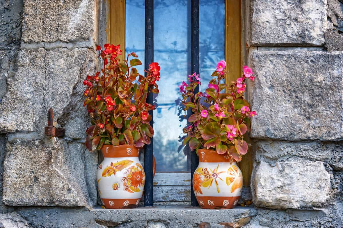 house, window, architecture, facade, flower pot, plant, outdoor