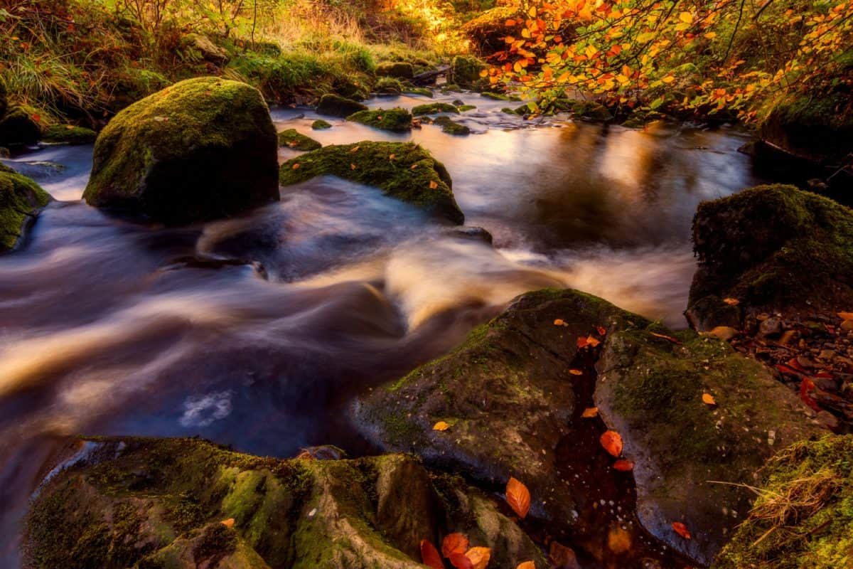 acqua, fiume, torrente, cascata, foresta, pietra, creek, paesaggio
