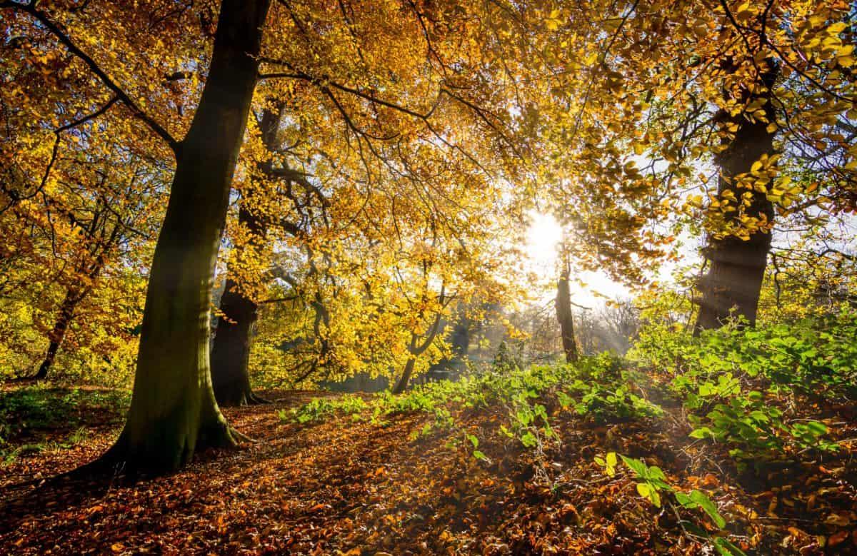 Holz, Natur, Baum, Dämmerung, Landschaft, Blatt, Ast