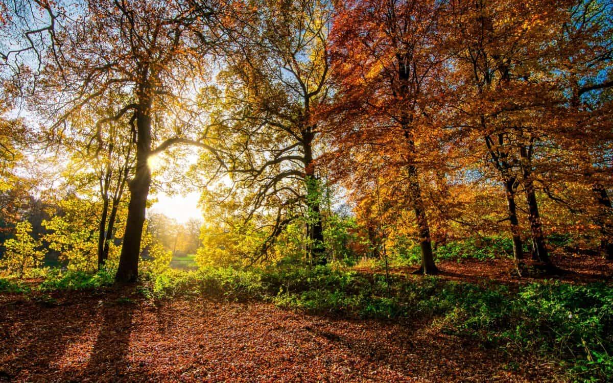 arbre, aube, nature, bois, paysage, feuilles, automne, forêt