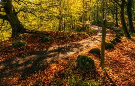природата, дърво, дърво, листа, пейзаж, есен, гора, растение