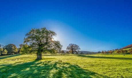 ciel bleu, arbre, campagne, été, colline, herbe, paysage, nature