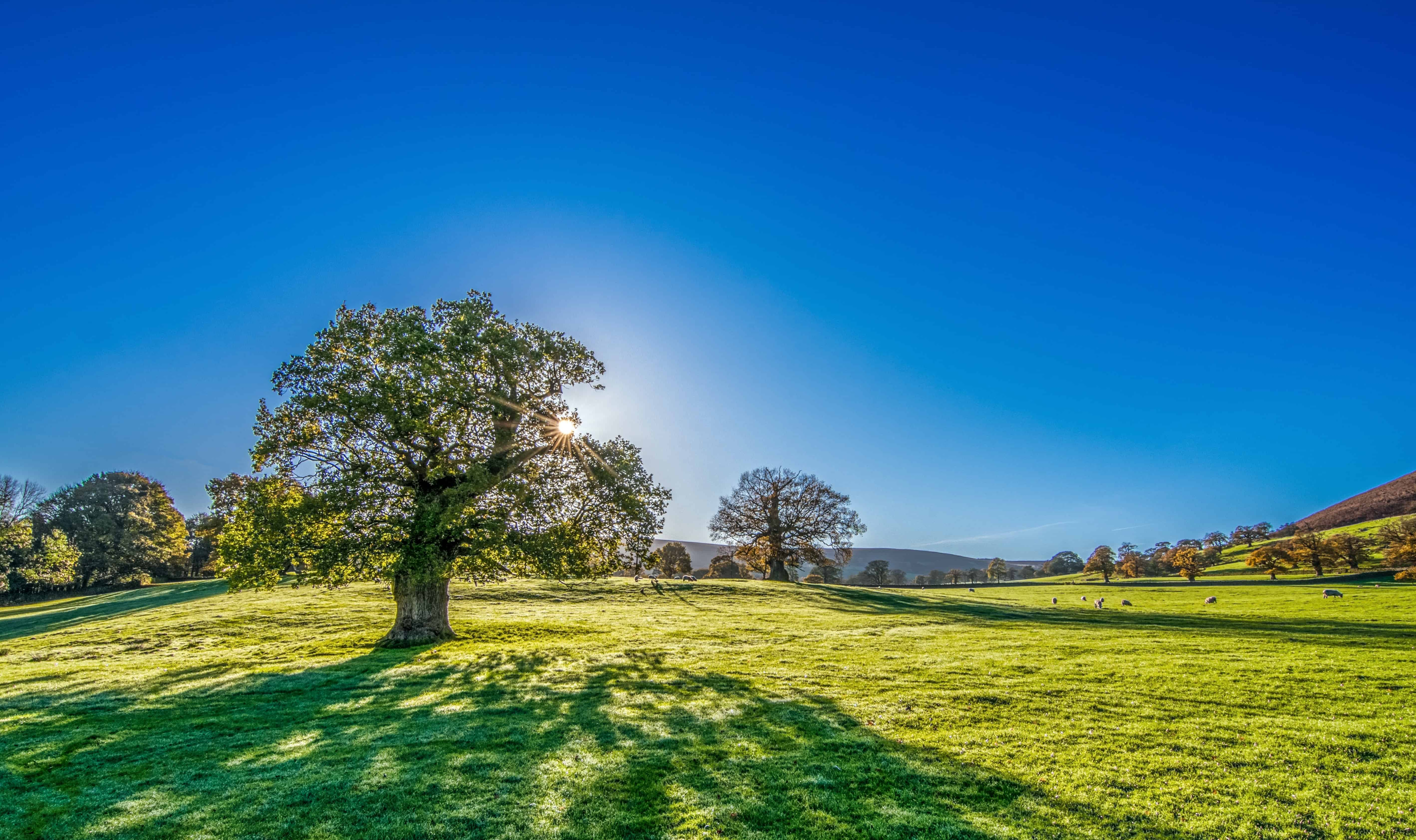 free picture: blue sky, tree, countryside, summer, hill, grass