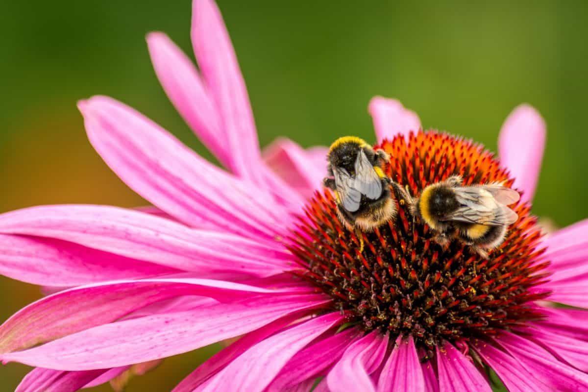 pollen, bee, nature, garden, summer, insect, macro, flower