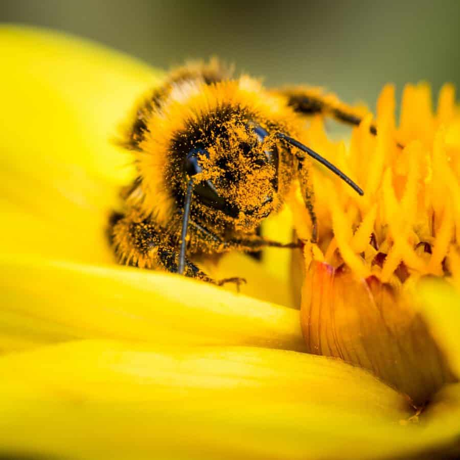 flores, insectos, polen, naturaleza, abejas, polinización, macro, detalle