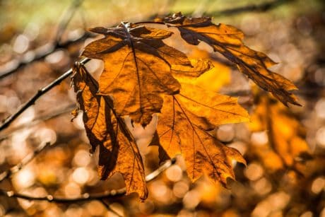 flora, brown, tree, autumn, dry, leaf, nature, outdoor