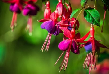 flore, fleur, jardin, nature, plante, macro, coloré, détail