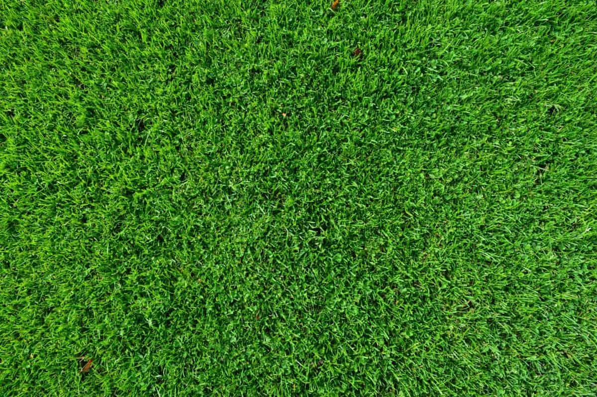 lehtiä, ruoho, nurmikko, vihreää ruohoa, vihreä, kuvio, kasvi