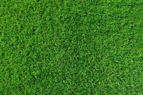 foglie, erba, Prato, erba verde, verde, modello, pianta