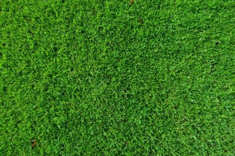 feuilles, gazon, pelouse, herbe verte, vert, modèle, plante