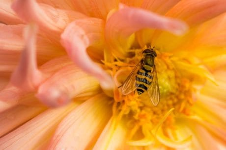 flower, nature, garden, flora, summer, insect, macro, detail, pollen