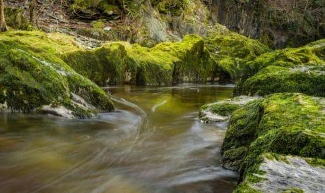 flusso, acqua, paesaggio, legno, fiume, natura