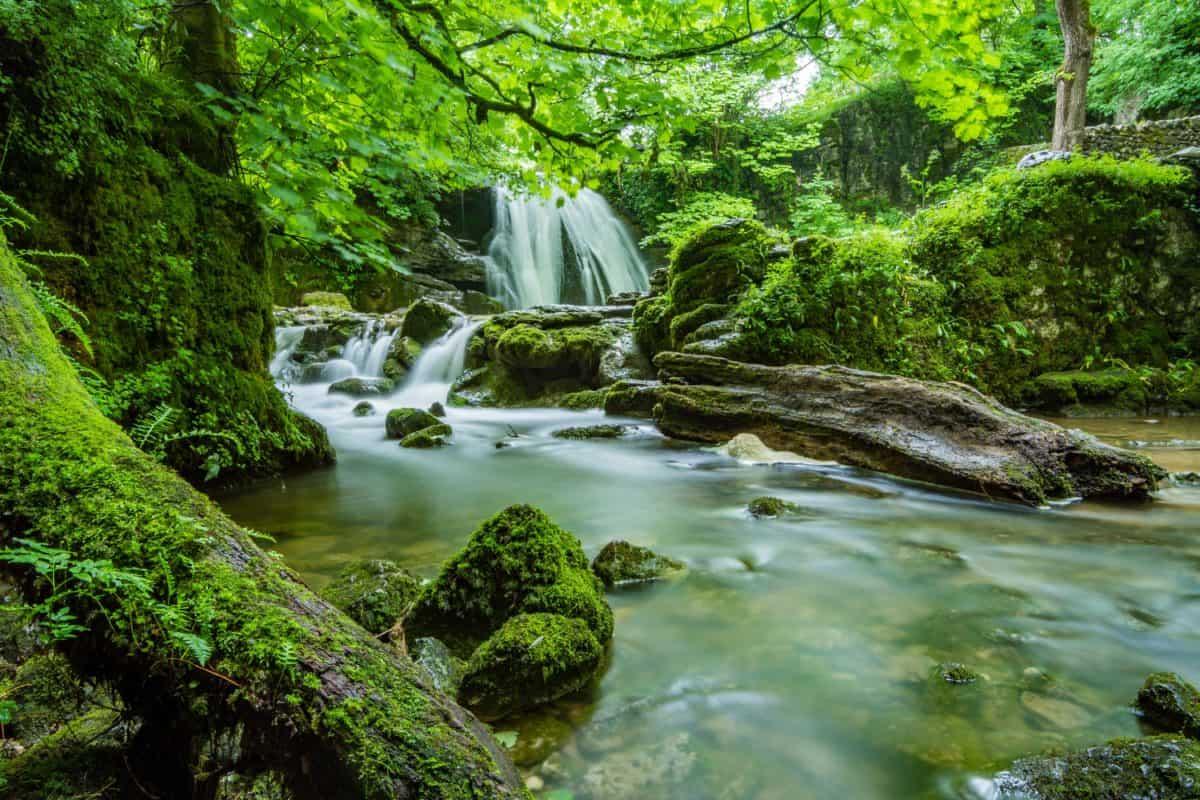 legno, paesaggio, flusso, acqua, cascata, natura, muschio
