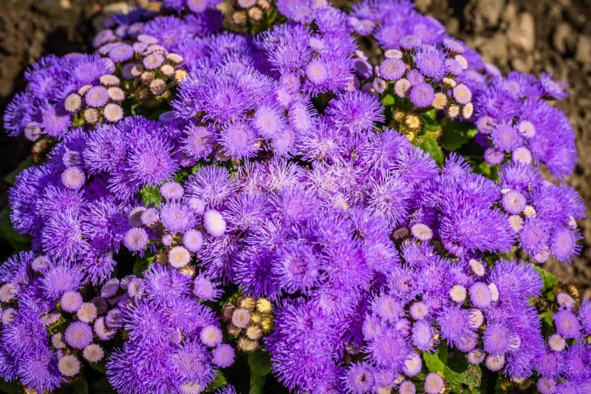 Natur, Sommer, Blume, Blatt, Garten, Flora, Blütenblatt, Pflanze