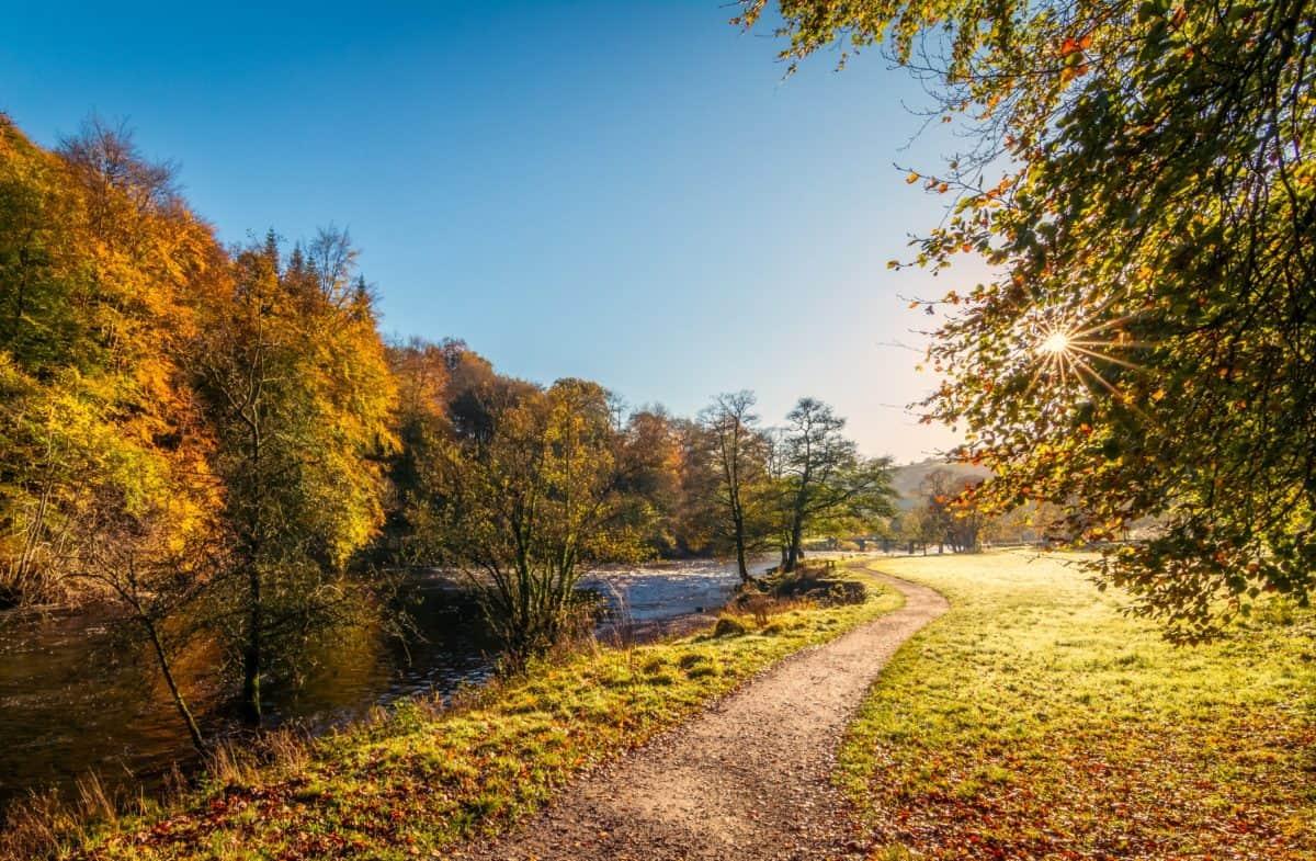 tree, leaf, road, wood, landscape, nature, autumn, river, sunsune