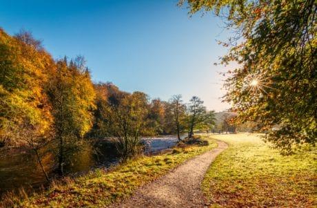 árbol, hoja, camino, madera, paisaje, naturaleza, otoño, río, sunsune