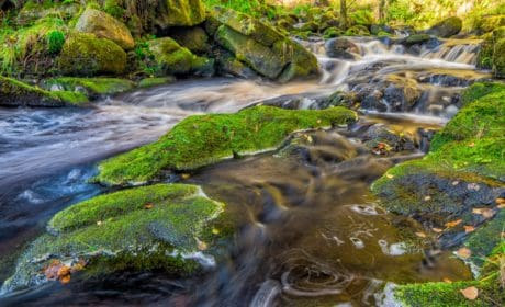 táj, folyó víz, patak, levél, természet, moss, vízesés