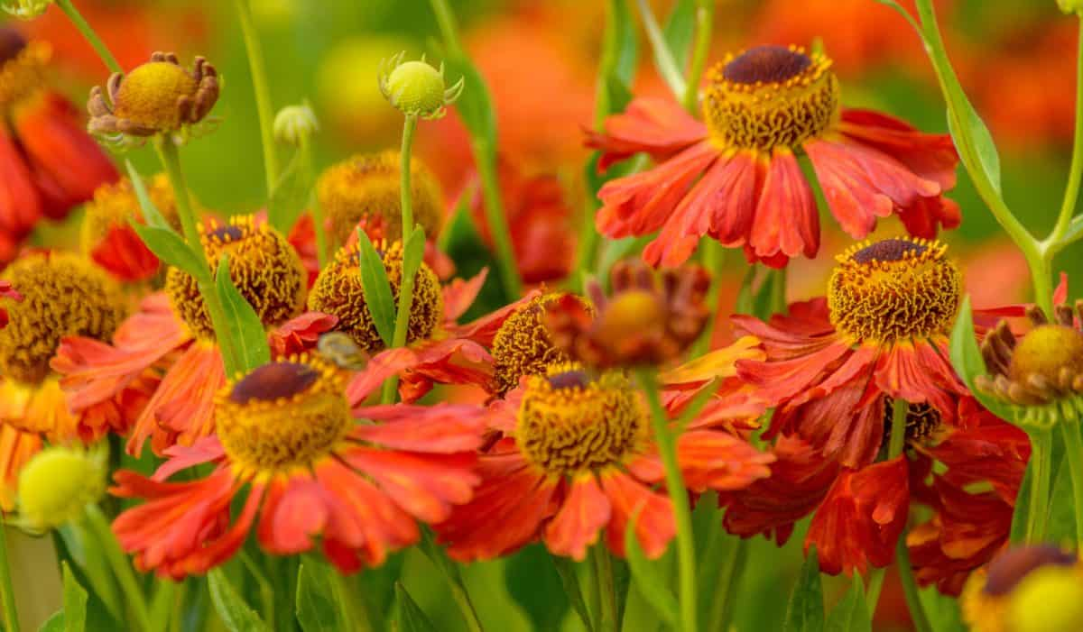 Flora, giardino, foglia, fiore, orticoltura, petalo, estate, natura