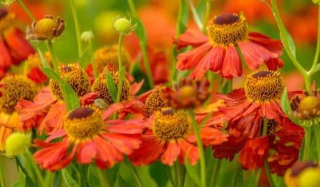 Flora, daun, bunga, hortikultura, kelopak, musim panas, Taman Alam