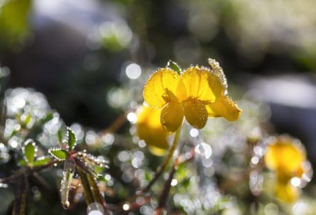 Flora, flori, natura, frunze, gradina, roua, umiditatea, macro
