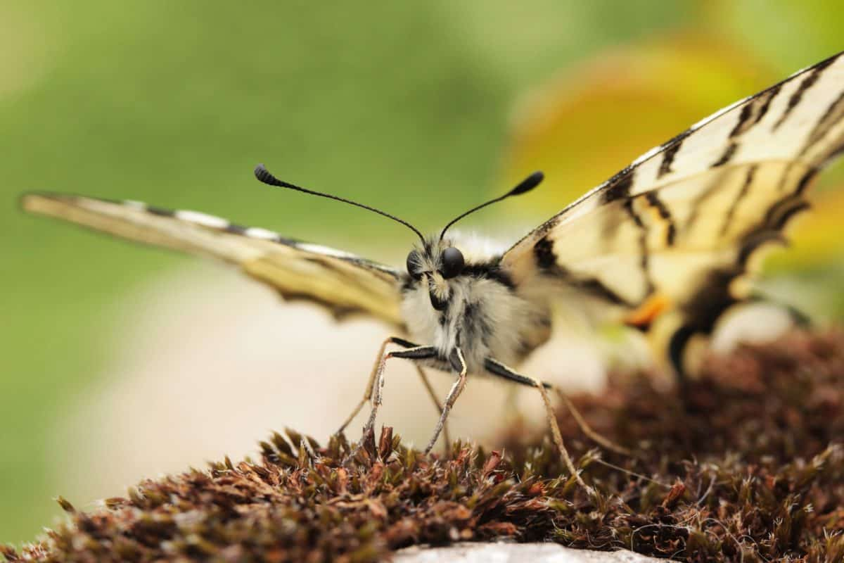 insect, nature, butterfly, wildlife, animal, plant, herb