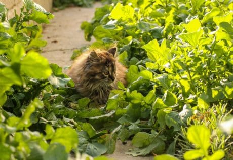 nature, green leaf, tree, outdoor, cat, flora, daylight