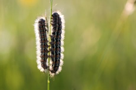 nature, macro, detail, flora, caterpillar, grass, summer, herb, plant, flower