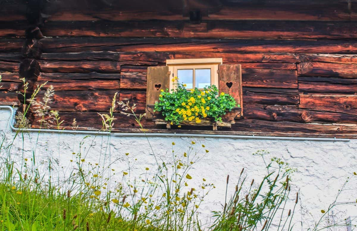 wood, house, flower, architecture, grass