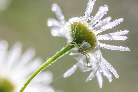 macro, detail, frost, flora, nature, summer, leaf, flower, ice, plant, blossom