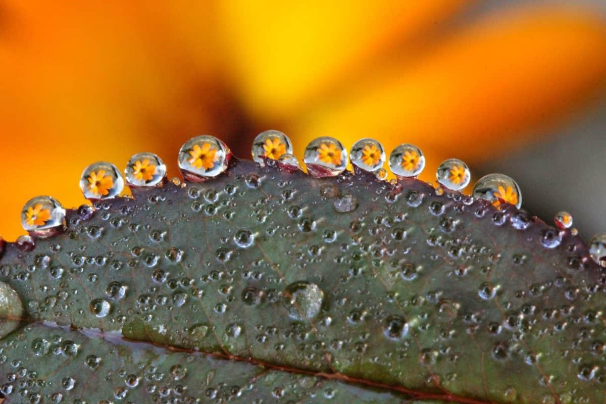 gocciolina, pioggia, acqua, bagnato, rugiada, l'umidità, macro, dettaglio