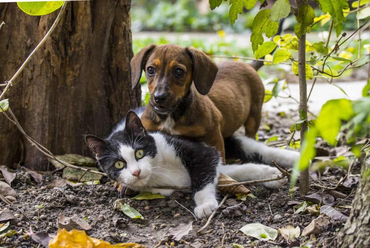 natura, carina, cane, gatto domestico, animale domestico, all'aperto, terra