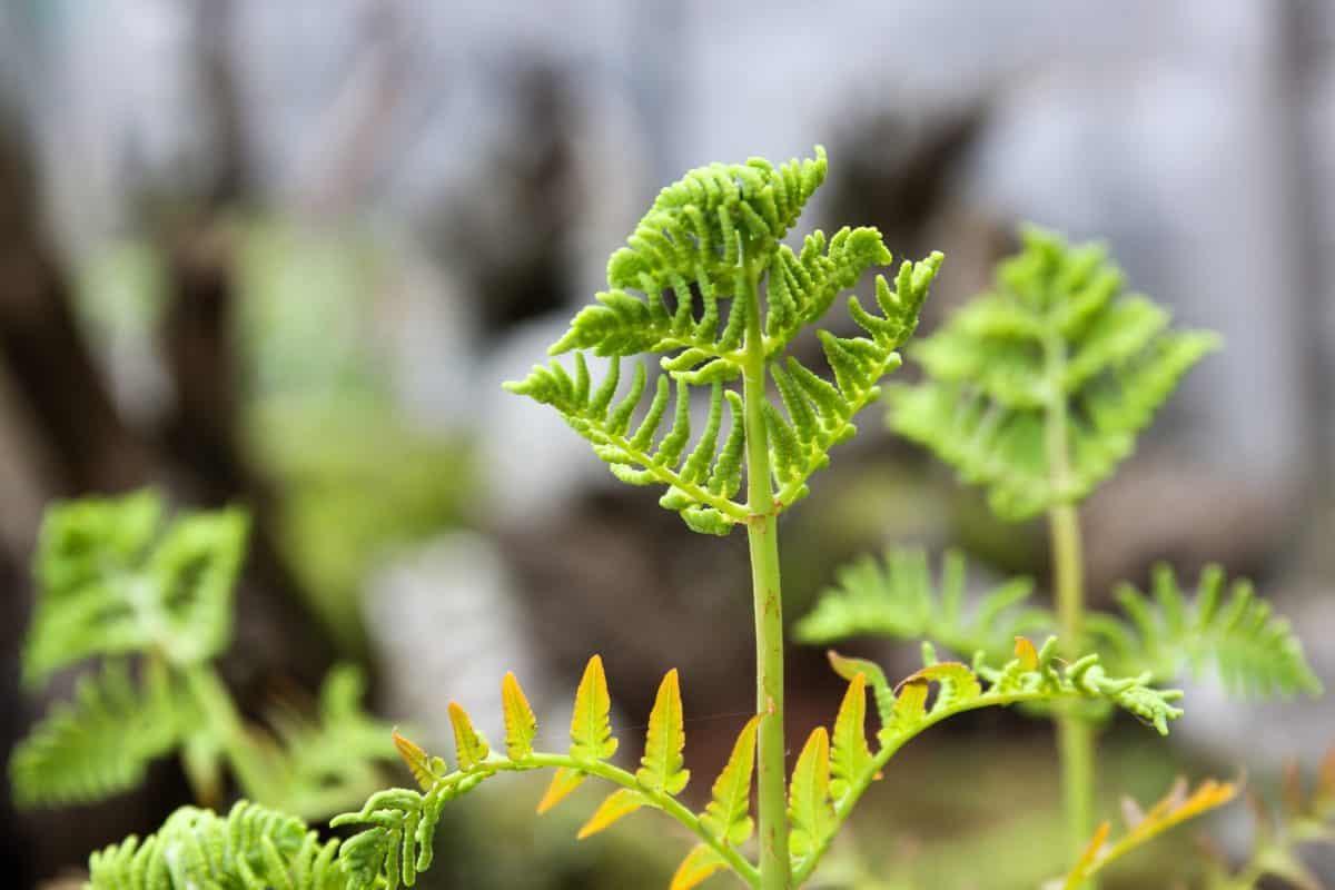 garden, flora, fern, nature, gree leaf, herb, environment