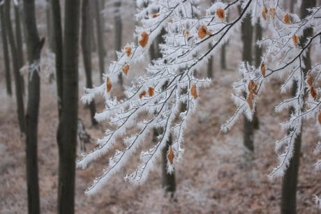 frost, snow, nature, flora, winter, cold, tree, branch, wood
