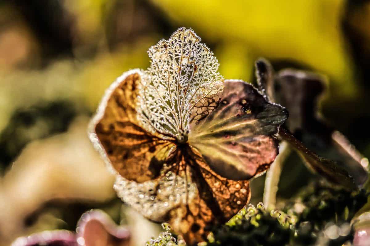 feuille, plante, automne, flore, nature, jardin