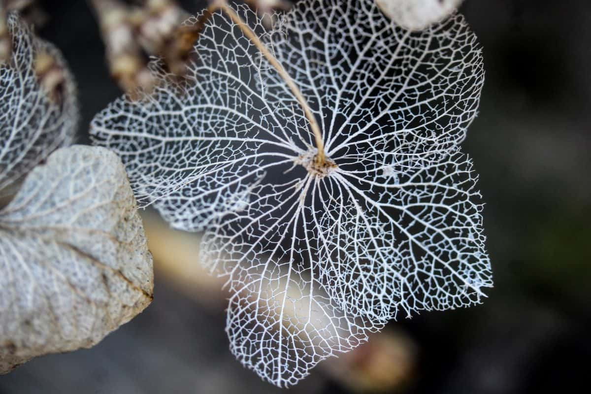 hojas, planta, flora, naturaleza, jardín, macro, detalle