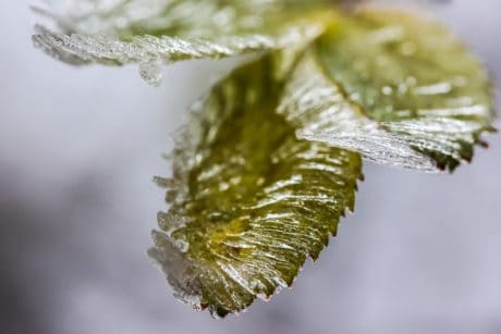 macro, detail, leaf, winter, nature, frozen, winter, ice, plant