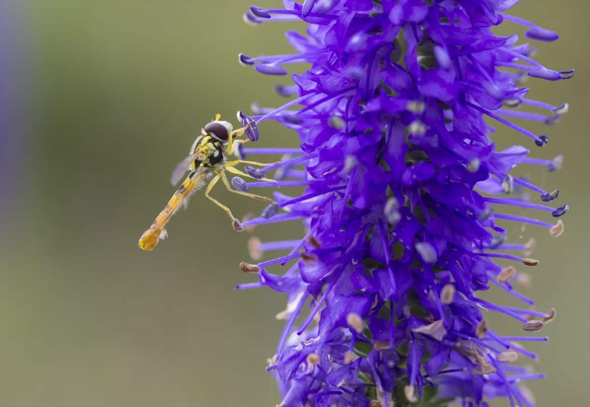 macro, nature, flower, summer, herb, insect, dragonfly